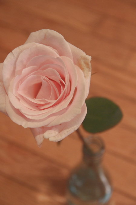 yesterday's rose (for the 15th, our monthly anniversary), one of countless roses the hubby has given me